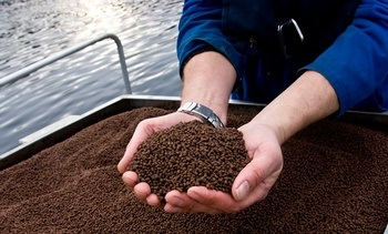 Nytt FHF prosjekt tester ut tørrfôr, fôringsstrategi og egnet teknologi