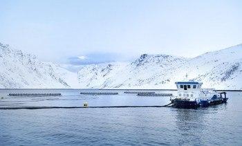 NRS kjøper seg inn i lakseoppdrett på Island