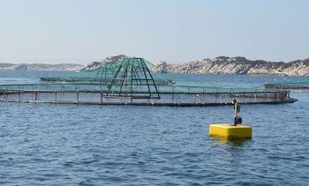 Dokumenterer miljøeffekter av havbruk i Midt-Norge