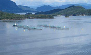 Slakter ut fisk på mistenkt ILA-lokalitet