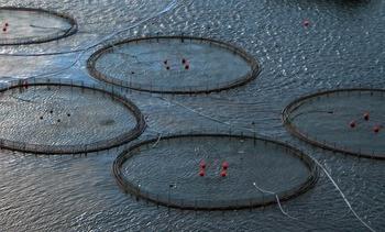 Bærekraft og vekst i europeisk havbruksnæring