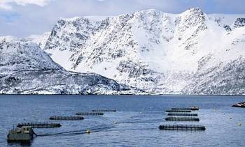 Nedgang for Austevoll Seafood
