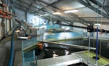Internasjonale vekstmuligheter for norsk vannrenseteknologi