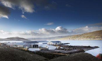 Bigger harvest compensates Bakkafrost for lower prices