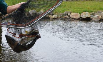 Ber KOFA vurdere om ulovlig tildeling av villfisk-midler har skjedd