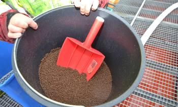 Ser nærmere på optimalisering av fôringsrutiner