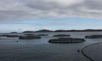 Scottish Salmon Company fed too much Slice to fish