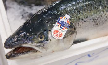 Scottish salmon exports worth £505m in 2018