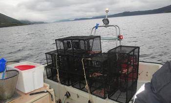 Avdekka nedslåande resultat under kontroll av leppefisk