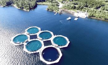 FHF med rapport om arealplanlegging i sjø