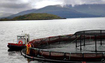 Marine Harvest gjør det bra i Skottland