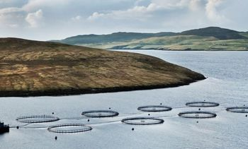 Better smolts boost salmon survival for Grieg Shetland