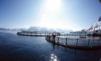 Sandnes Fiskeoppdrett øker omsetningen