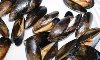 Climate change hampering mussel shell growth