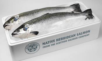 Scottish Salmon Company harvested 33,800 tonnes in 2019