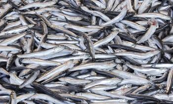 Webinar to examine latest fish-free feed trends