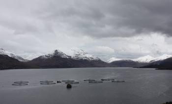 Marine Harvest update highlights Scottish boost