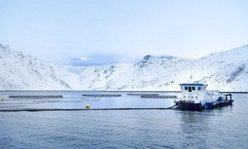 Export value of Norwegian salmon leaps 21 per cent