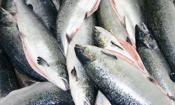Have your say on salmon standard