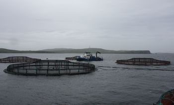 Fish farm licence overhaul looms