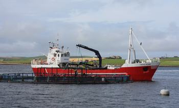 Investment suggests confidence in salmon sector