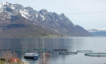 Noruega: Aumenta uso de antibióticos en el salmón durante 2018