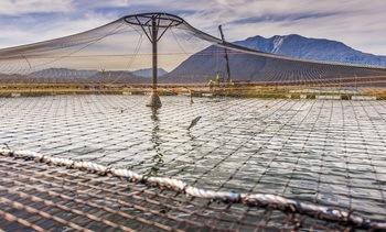 Cosechas anuales de Marine Harvest Chile incrementan en 22%