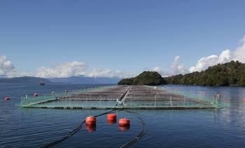 Invermar aumentará 25% su producción de salmón este año