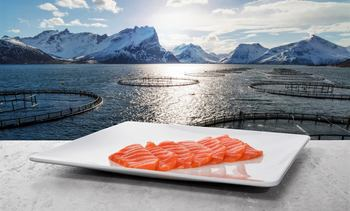 Norway reports record August for salmon exports