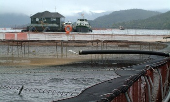 """Plan Magallanes"": salmonicultores valoran regulación proactiva para resguardo sanitario"