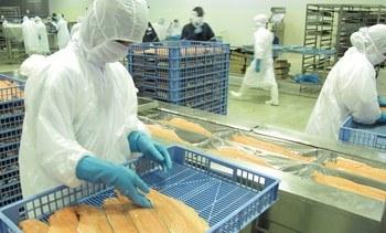 Salmonicultores harán test PCR preventivo a todos sus trabajadores en Punta Arenas