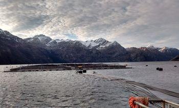 50,000 trout escape from Cermaq Chile farm
