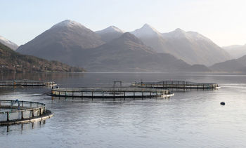 Mowi offers to relocate Loch Ewe and Loch Duich farms