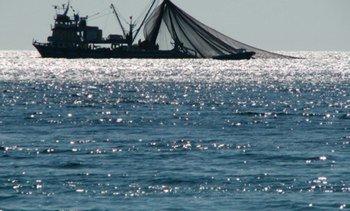 Consorcio europeo implementará servicio de datos para análisis de pesca y acuicultura