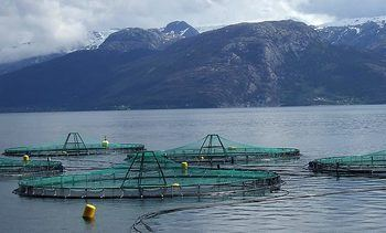 Aquaculture innovators chosen for London showcase