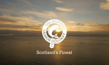 Fish deaths cause Q3 loss for Scottish Salmon Company