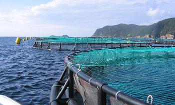 Cooke Aquaculture revela el foco de sus planes de expansión