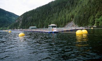 H2O2 proves popular in BC