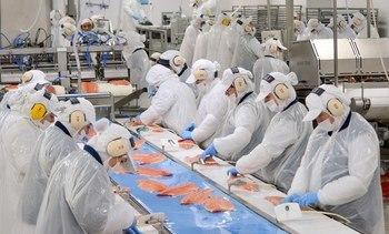 Blumar to build Atlantic salmon production