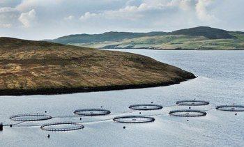 Grieg puts £125m price tag on Shetland farms
