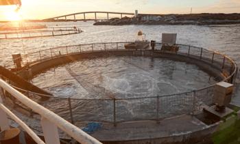 'Concrete cage' fish emerge lice-free