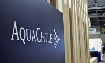 AquaChile revela los pasos que está dando en Magallanes