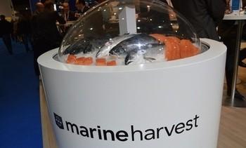 Marine Harvest bytter navn