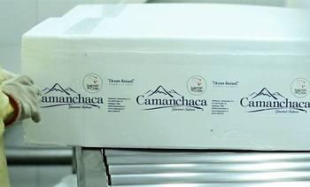 2020: Estiman que Salmones Camanchaca logrará los mejores resultados de su historia