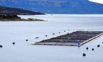 Chilean Atlantic salmon harvest grew 8.6% in 2018