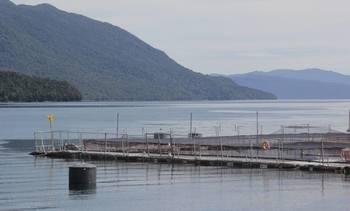 Industria y Gobierno atentos ante alza de siembras de salmón