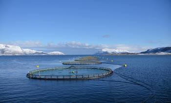 Fish farmer tests the water with 840-gram smolts