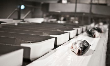 Marel Fish revenue leaps by 28%
