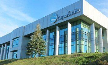 Aquachile alcanza siete trimestres consecutivos de ganancias