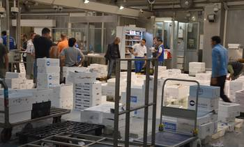 God vekst i lakseeksporten til Frankrike og Italia